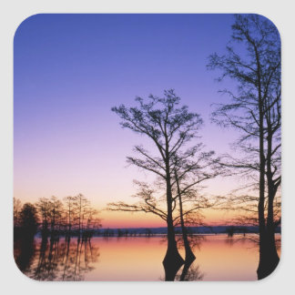 Bald cypress trees silhouetted at sunset, square stickers