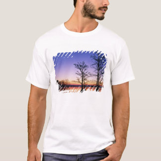 Bald cypress trees silhouetted at sunset, T-Shirt