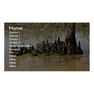 Bald cypress trunk and knees Double-Sided standard business cards (Pack of 100)