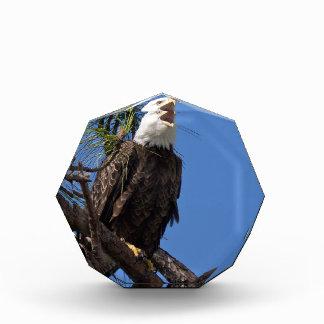 Bald_Eagle-