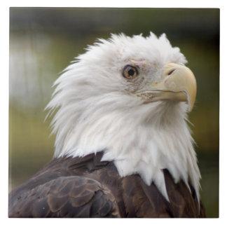bald eagle10x10 tiles