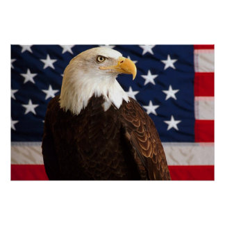 Bald Eagle 4th Of July poster 14
