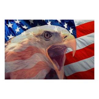 Bald Eagle 4th Of July poster 4