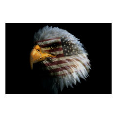 Bald Eagle 4th Of July poster 6