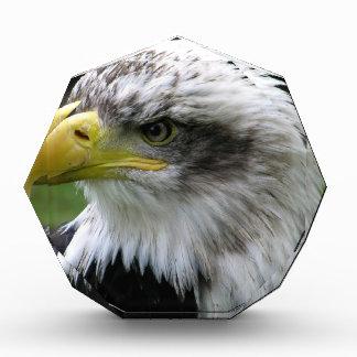 bald-eagle acrylic award