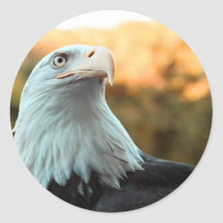 Bald Eagle Against Autumn Leaves Classic Round Sticker