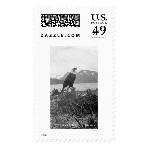 Bald Eagle Alaska 1920 Stamp
