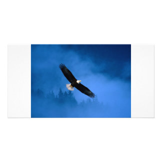 Bald-Eagle-Alaska Card