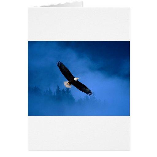 Bald-Eagle-Alaska Cards