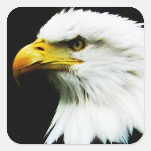 Bald Eagle - American Eagle Photograph Square Sticker