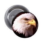 Bald Eagle American Eagle Pinback Button