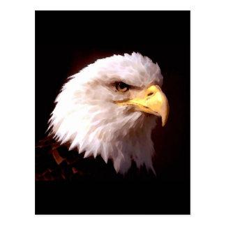 Bald Eagle American Eagle Postcard
