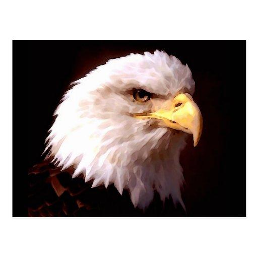 Bald Eagle American Eagle Post Cards