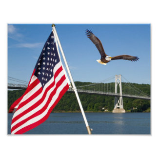 Bald Eagle (American Pride) Photo Print
