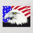 Bald Eagle and American Flag Postcard