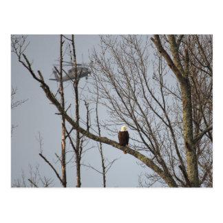 Bald Eagle and Blackhawk Postcard