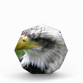 bald-eagle award
