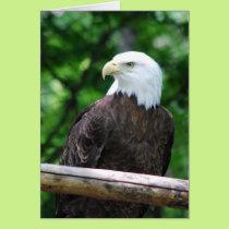 Bald Eagle Bird Greeting Card