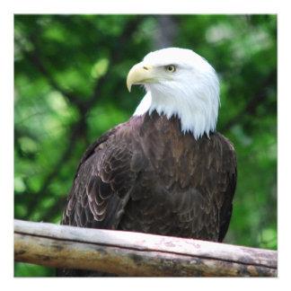 Bald Eagle Bird Invitations