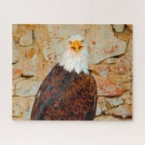 Bald Eagle Bird of Prey. Jigsaw Puzzle
