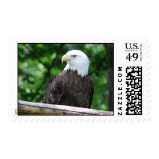 Bald Eagle Bird Postage Stamp