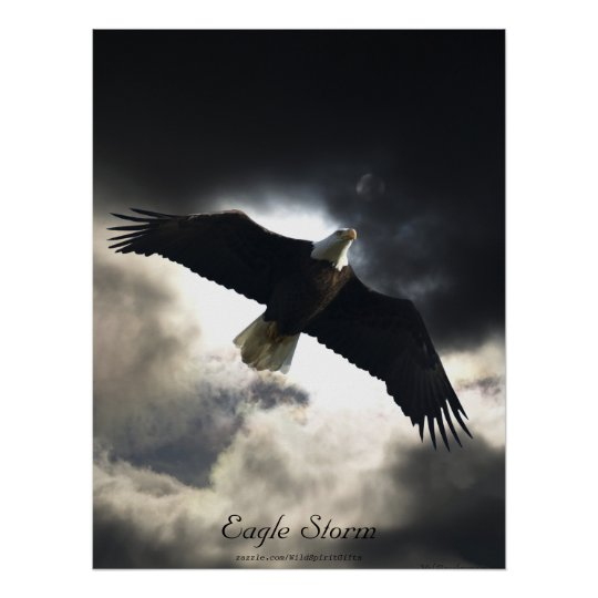Bald Eagle Bird Poster