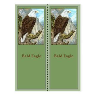 Bald Eagle Birding Bookmarks Postcard