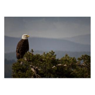 Bald Eagle - Business Card