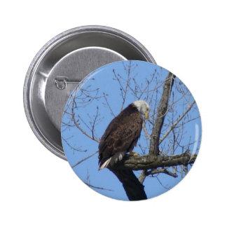 Bald Eagle Pins