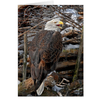 Bald Eagle by Snowy Nest Greeting Card