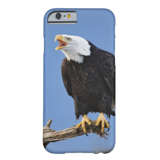 Bald Eagle calling, Homer, Alaska, Haliaetus Barely There iPhone 6 Case
