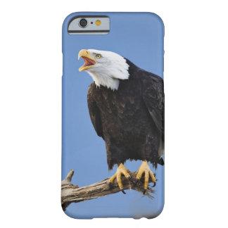 Bald Eagle calling, Homer, Alaska, Haliaetus Barely There iPhone 6 Case
