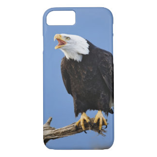 Bald Eagle calling, Homer, Alaska, Haliaetus iPhone 8/7 Case