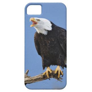 Bald Eagle calling, Homer, Alaska, Haliaetus iPhone SE/5/5s Case