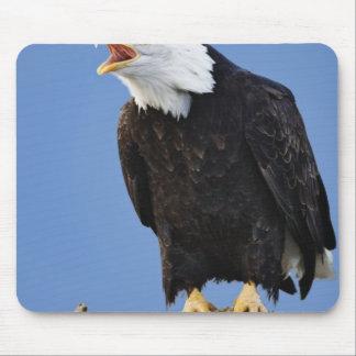 Bald Eagle calling, Homer, Alaska, Haliaetus Mouse Pad