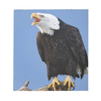 Bald Eagle calling, Homer, Alaska, Haliaetus Note Pad