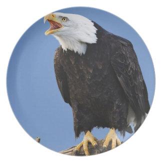 Bald Eagle calling, Homer, Alaska, Haliaetus Party Plate