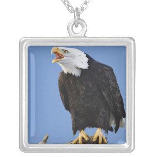 Bald Eagle calling, Homer, Alaska, Haliaetus Silver Plated Necklace