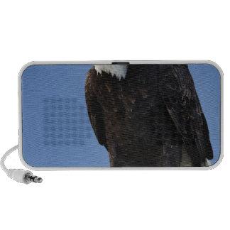 Bald Eagle calling, Homer, Alaska, Haliaetus Travel Speaker