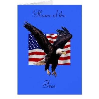 Bald Eagle Cards