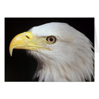 Bald Eagle Card