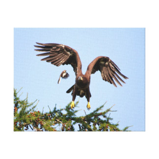 Bald Eagle Chased by a mockingbird Canvas Print