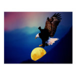 Bald eagle chases the full moon postcard