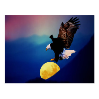 Bald eagle chases the full moon post card