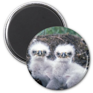 Bald Eagle Chicks 2 Inch Round Magnet