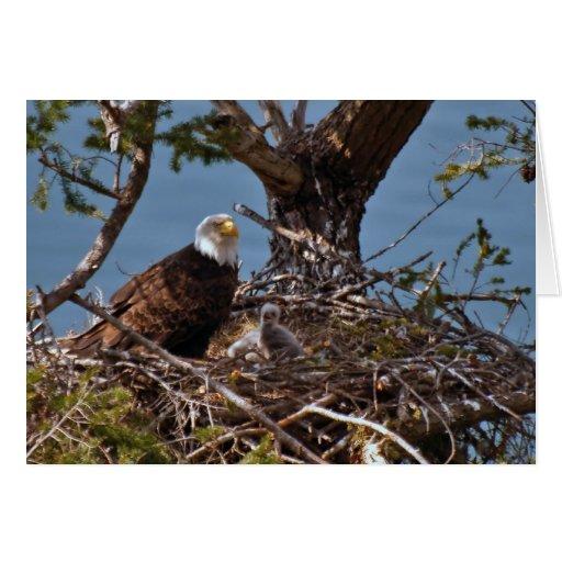 Bald Eagle Chicks - Card