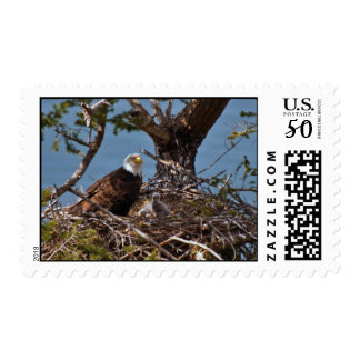 Bald Eagle Chicks Postage