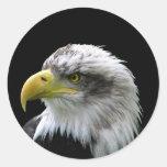 Bald Eagle Classic Round Sticker at Zazzle