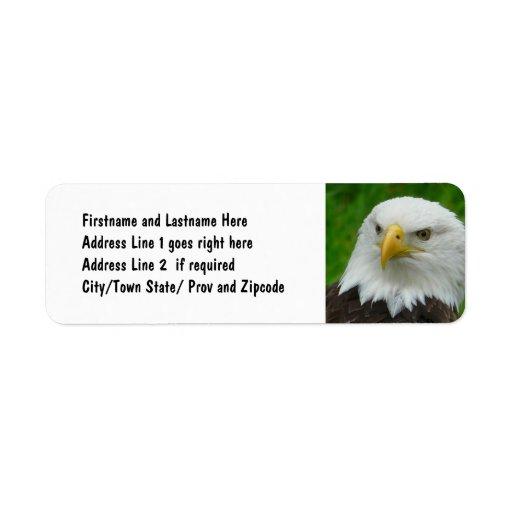Bald Eagle - Close up Wild Eagle Photo Label