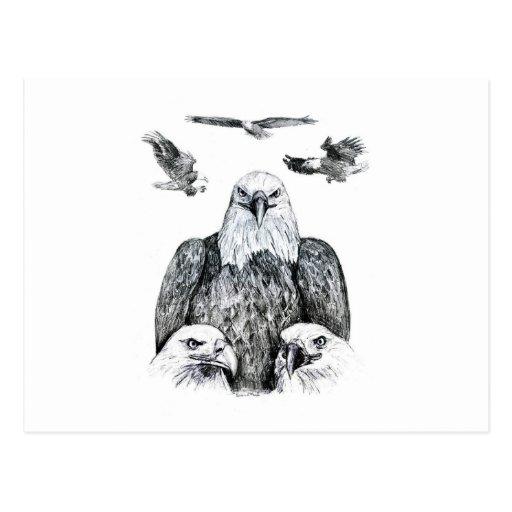 Bald Eagle Collage Pencil drawing sketch Postcard